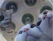 Liebevolle Katzenbetreuung und Kleintierbetreuung gesucht