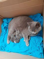 Katzenbabys sind da