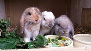 Kaninchen Betreuung