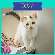 Toby (Kater aus