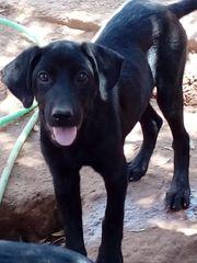Pflegestellen für unsere Hunde dringend
