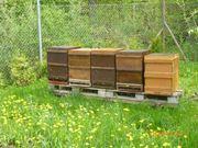 Bienen Bienenvölker auf
