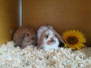 Süße Kaninchen Kinder