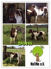 Dotti - flotte Shetty-