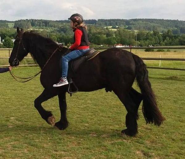friesen pferd kaufen