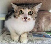 Junge Katze Ayala (