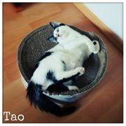Tao sucht eine Familie