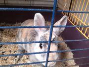 Kaninchen 3 Stück
