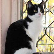 Katze Polly sucht