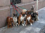 Hundesitting URLAUBSzeit