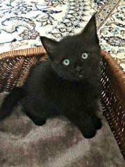 Kätzchen Kitten Baby