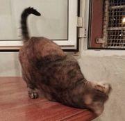 Liebe Katzen - Dame,