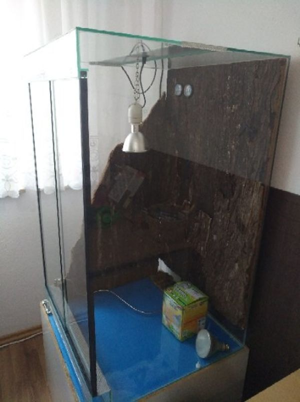 Terrarium Komplett » Reptilien, Terraristik