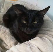 Katze Onta sucht ihr Zuhause