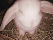 Baby Kaninchen zu