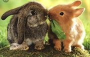 kastrierte Kaninchen Buben