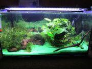 Aquarium 54l,Dennerle