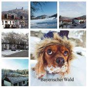 Winterferien im Bayerischen Wald - Hunde