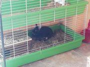 Hase-, kaninchen weibchen