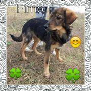 Fimo sucht liebevolles