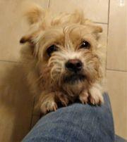 Jessi - kleiner Hund