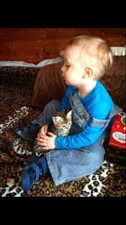 Wunderschöne Savannah Kitten