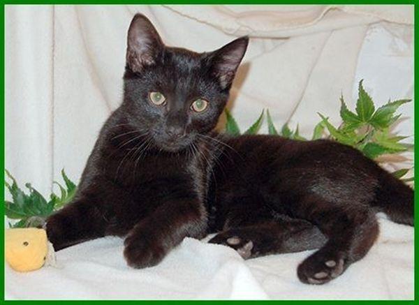 Zorro, Geburt: September » Katzen