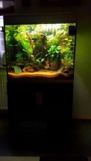 200 l Aquarium (