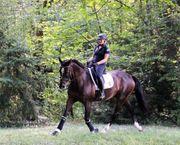 FN Pferdewirtin sucht Pferd zur