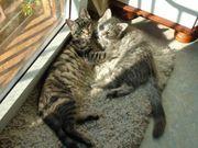 Süße Katzenkinder