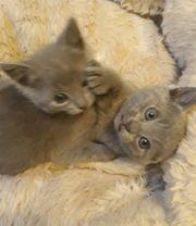 Entzückende Kätzchen für neues Zuhause