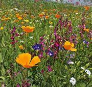Blühpatenschaften