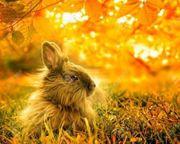 Kaninchen Pärchen gesucht