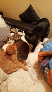 Katzen Baby Kitten sucht ihren