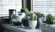 Gartenhelfer in für Haus und