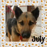 JULY - Schäferhund-Airedale-