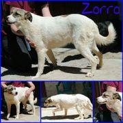 Zorro sucht Familie
