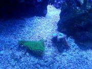 Meerwasser Korallen und Fische