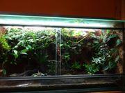 Terrarium 120x50x60 cm komplett Preis