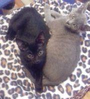 Katzenbaby Benny und