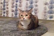 Katzen vorübergehend abzugeben