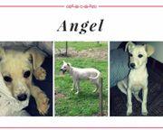 Angel sucht liebevolles