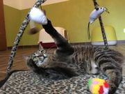 Süße Tigerkatze sucht