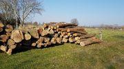 brennholz stammholz