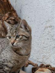 Katzenkinder aus Murrhardt