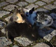 6 junge Kaninchen