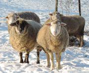 Wintertage im Odenwald für Familien
