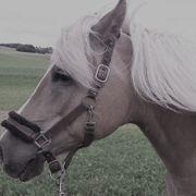 Pferd sucht