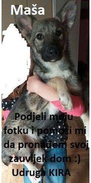 4 5 Monate Junge Husky