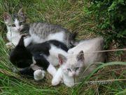 Wunderschöne Katzen